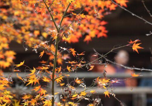 Vremea se încălzește în a doua parte a lunii octombrie.